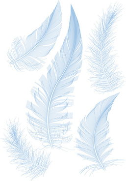 realistic feather illustration design vector