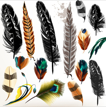 realistic feathers vector design set