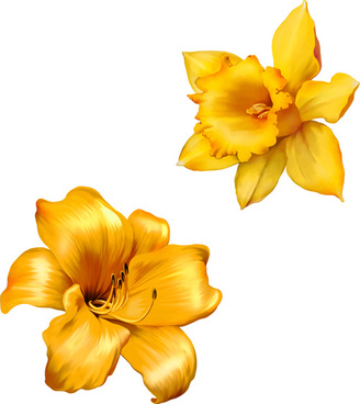 Yellow Flowers Beautiful Vectors Free Vector In Encapsulated