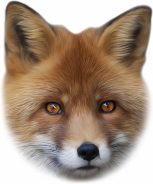 realistic fox face design vector