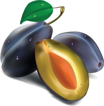 realistic fruit 02 vector