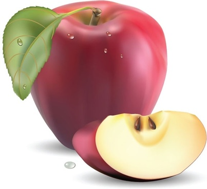 realistic fruit 05 vector