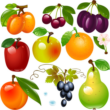 realistic fruits and berry design vector