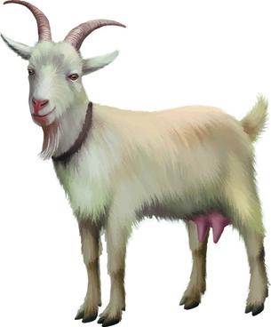 realistic goats vector graphics