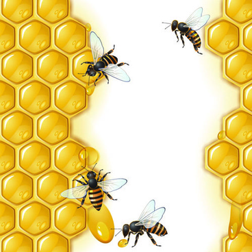 realistic honey and bees vector graphics