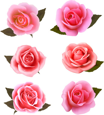 realistic pink roses vector