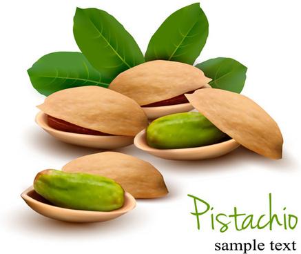 realistic pistachio vector