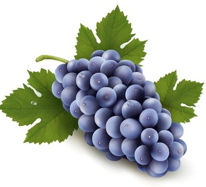 realistic purple grape free vector