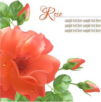 realistic red rose background art