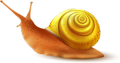 realistic snails vector design