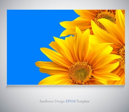 realistic sunflower vector