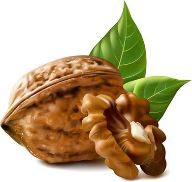 realistic walnuts design vector