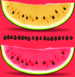 realistic watermelon elements vector