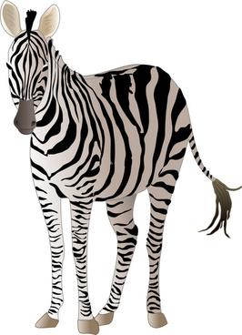 realistic zebra vector free