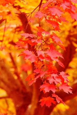 red and yellow autumn