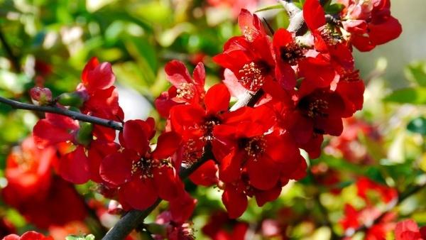 red flower spring sunshine