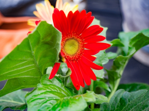 red flower with leaf
