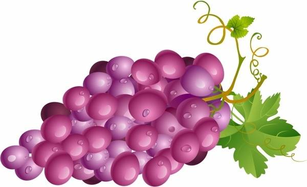 grape free vector download 423 free vector for commercial use rh all free download com graph vector graph vector equation