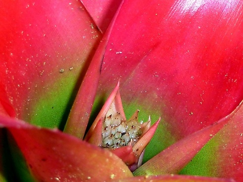 red green plant
