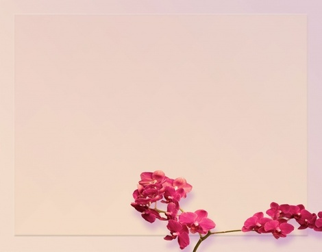 red orchid background