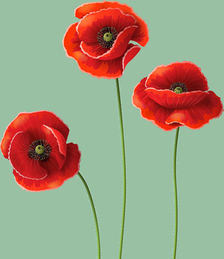 Red poppy flowers free vector download 16545 free vector for red poppy design vector graphics mightylinksfo