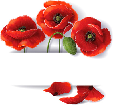 red poppy with white background vector