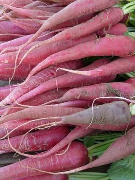 red radish radish vegetables