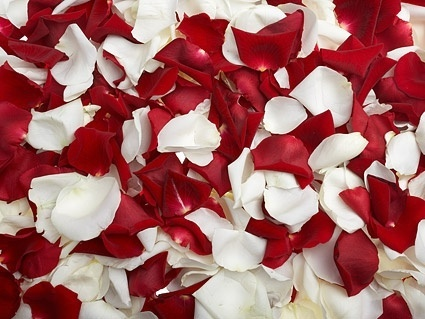 red rose and white rose petals stock photo