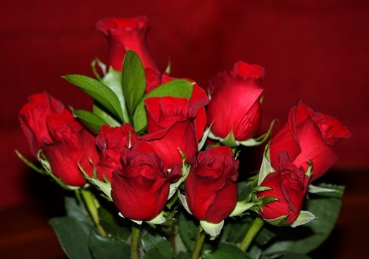 red roses flowers flora