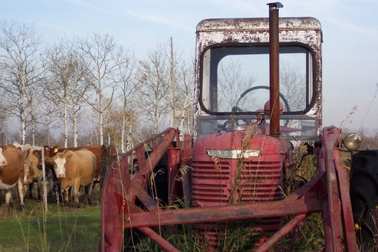 red tractor amp cattle