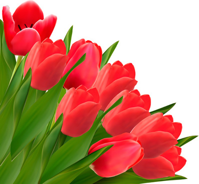 red tulip flowers creative design vector