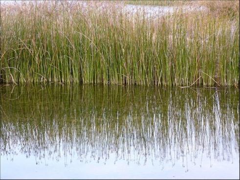 reeds 916