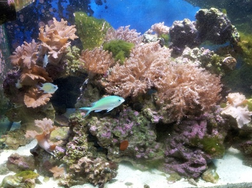 reef tank and fish