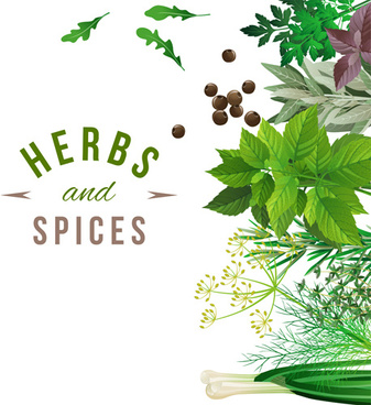 refreshing herbs and spices vector background