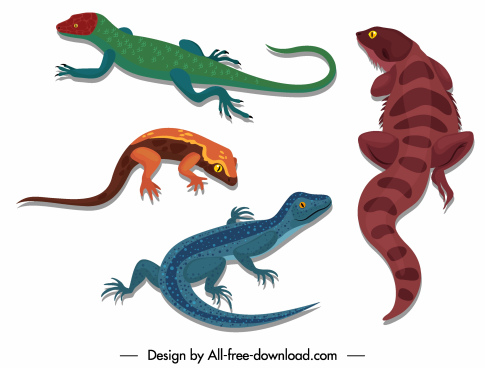 reptile icons gecko salamander sketch colored design