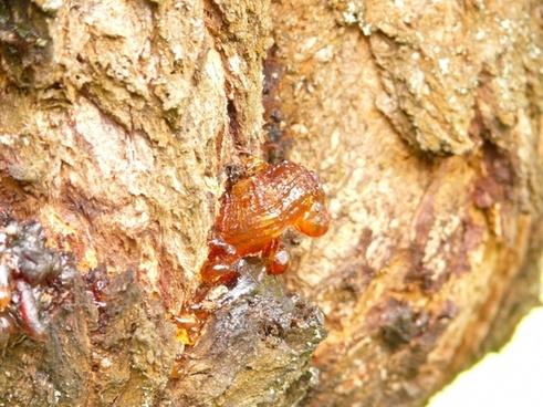 resin tree lebendharzung