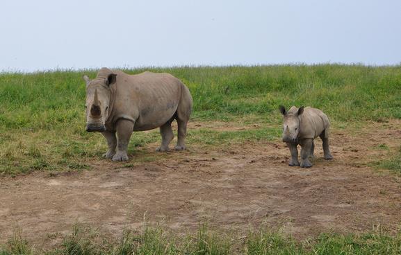 rhino mother amp baby