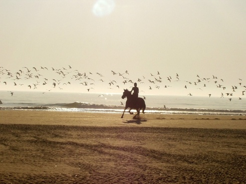 ride horse beach