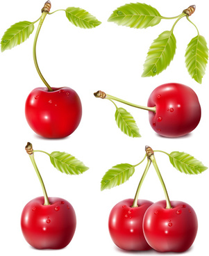 ripe cherries creative vector