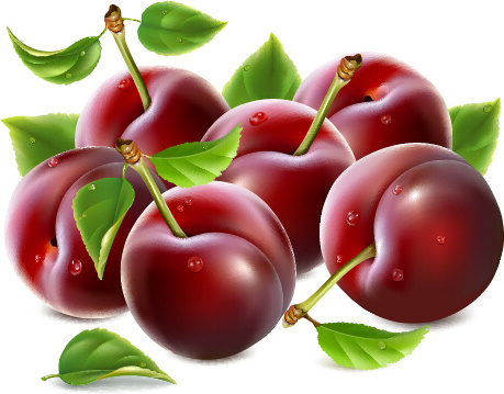 ripe fresh cherry creative vector