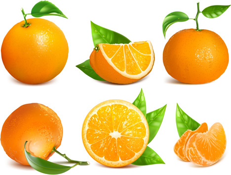 ripe oranges and leaves vector