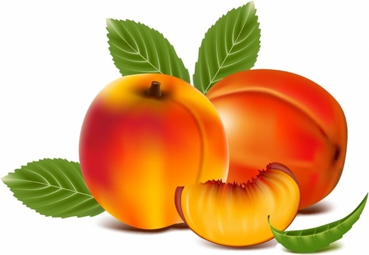 Peach free vector download (195 Free vector) for ...