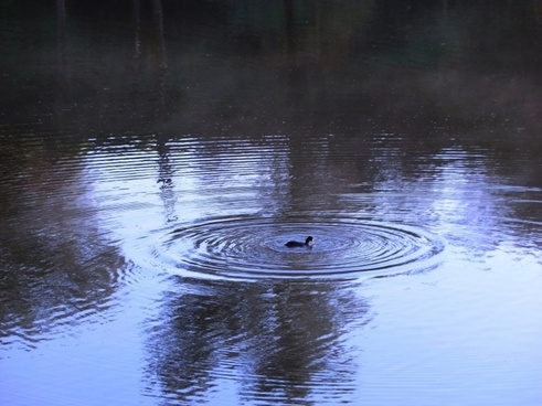 ripples on a pond 3739
