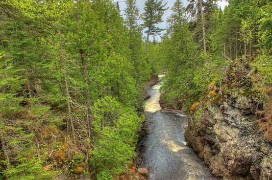 river among the trees at cascade river state park minnesota
