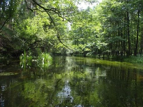 river green nature