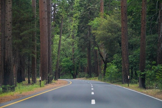 road going through trees in the forest