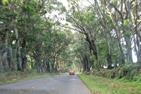 road through tunnel of trees