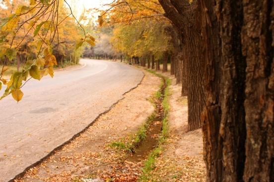 road tree sheet