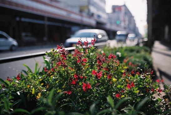 roadside early summer