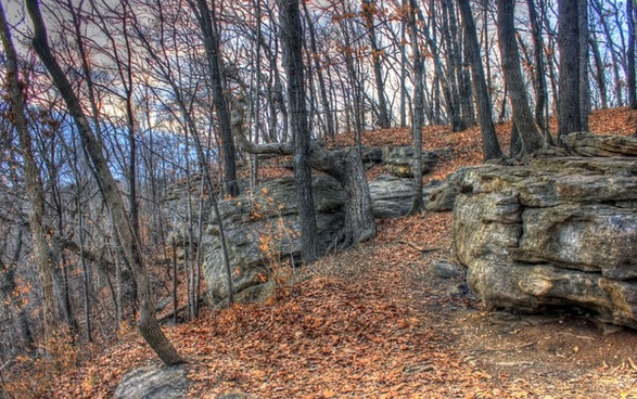 rocks in the forest at weldon springs state natural area missouri